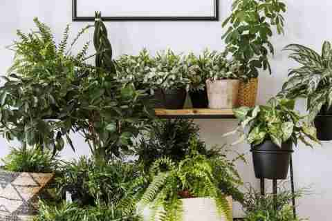 Oxygen Boosting Plants